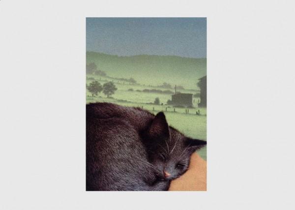 Postkarte Schlafende Katze