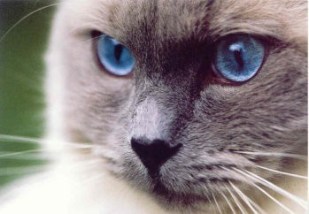 Postkarte Blaue Augen