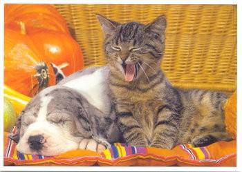 Postkarte Schlafgenossen