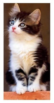 XXL-Postkarte Kitten