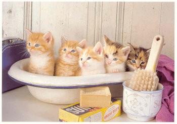 Postkarte Katzenwäsche