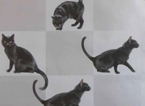 Geschenkpapier Black Cat, 1 Bogen und 1 Geschenkanhänger