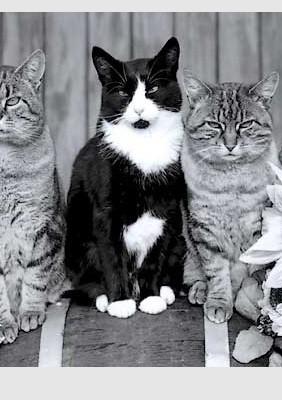 Buch: Komische Katzen