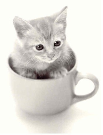 Postkarte s/w Kitten im Kaffeebecher