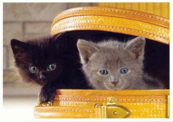 Postkarte Katzenköfferchen