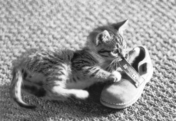 Postkarte s/w Kitten und Schuh