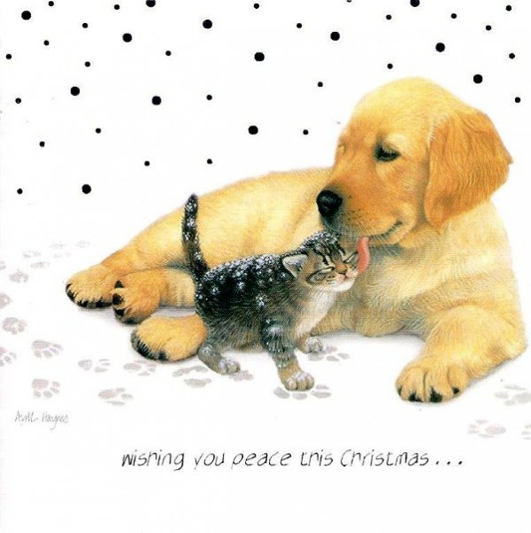 Weihnachtskarte quadr. Wishing you Peace