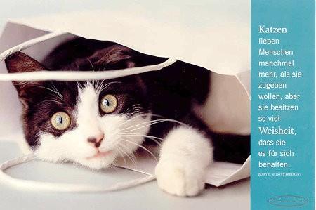 Postkarte Katzen lieben Menschen ....