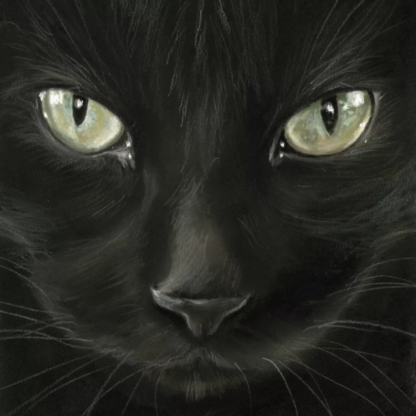 Napkins Black Cat