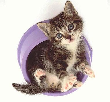 Quadratische Postkarte Kitten im Napf
