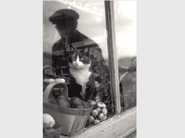 Postkarte s/w Am Fenster
